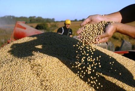 Frontera-agricola-crecera-2%-en-area-y-6%-en-volumen