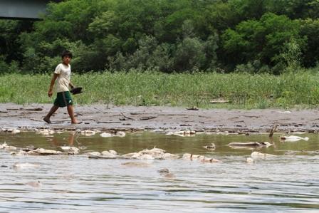 Consecuencias-de-la-crisis-climatica-provocaria-muerte-de-peces-en-rios-y-lagos-