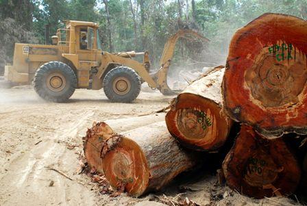 Sector-forestal-culmina-otro-ano-con-incertidumbre