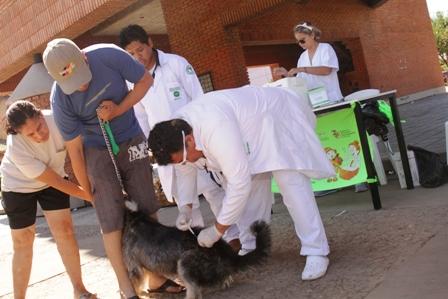 Vacunan-a-mas-de-280.000-perros-en-Santa-Cruz