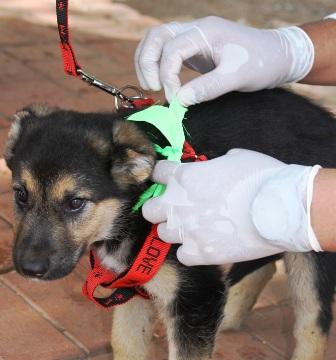 3.000-Brigadas-para-campana-de-vacunacion-canina