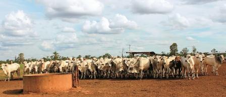Ciclo-alcanzara-a-3,1-millones-de-ganado