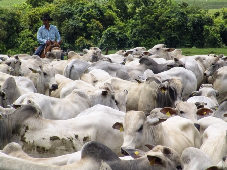 Proyecto-quiere-potenciar-la-ganaderia-en-la-chiquitania