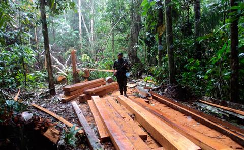 Ref. Fotografia: La deforestación se redujo en un 75% según la ABT