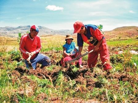 Hay-70.000-campesinos-dedicados-a-la-agricultura-familiar