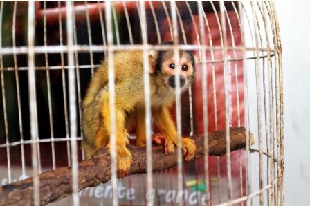 Rescatan-1.000-animales-silvestres