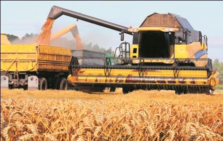 Precio-de-trigo-seduce-a-productores-del-grano
