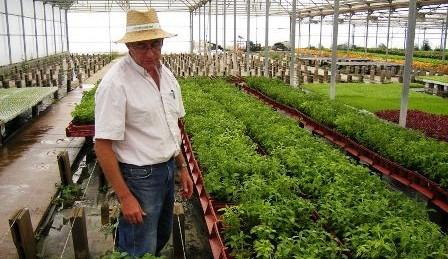 Seis-paises-debatiran-la-produccion-de-la-stevia