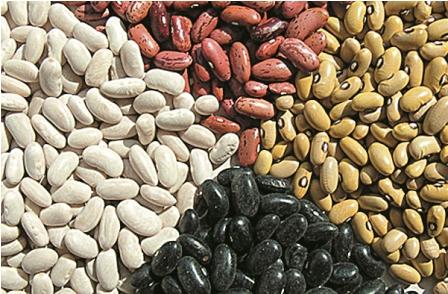 Lanzara-nueva-variedad-de-semilla-
