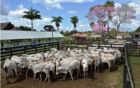 Advierten-merma-en-la-oferta-de-carne-en-2015
