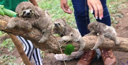 Zoo-cuenta-con-tres-crias-de-esta-especie