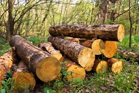 5-8-millones-de-hectareas-fueron-deforestadas