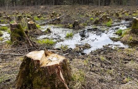 ABT-propone-entrar-a-la-era-de-plantaciones-forestales