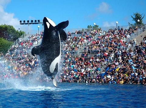 SeaWorld-suspende-espectaculos-de-orcas-tras-anos-de-polemica-en-EEUU