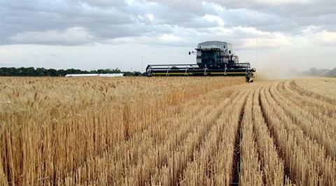 Argentina-elimina--impuestos-a-exportacion-de-cereales-