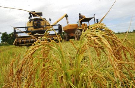La-produccion-del-agro-cruceno-disminuyo-un-9,8%-este-ano
