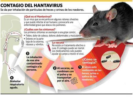 Declaran-alerta-sanitaria-por-enfermedad-Hantavirus-