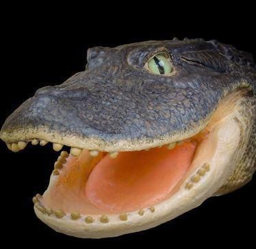 Hallan-restos--fosiles-de-cocodrilos-en-el-Peru