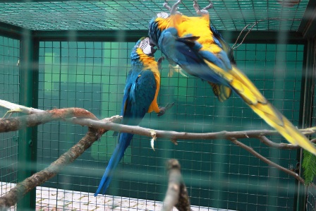 Rescatan-mas-de-600-animales-silvestres
