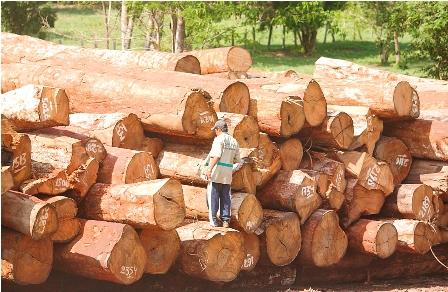 Ref. Fotografia: Producción. El 80% de las hectáreas aprovechadas por el sector forestal está bajo el manejo de TCOS.