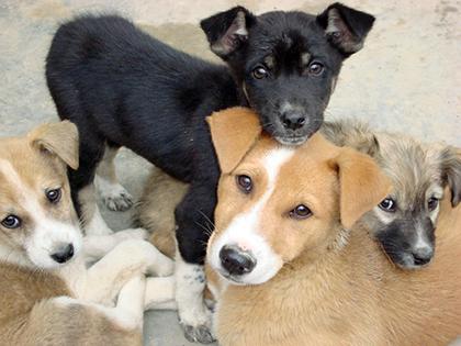 Camara-de-Diputados-aprueba-ley-de-proteccion-a-los-animales-