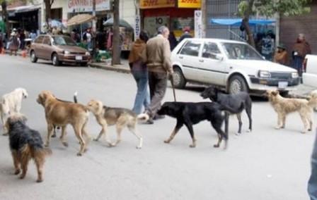 Alerta-amarilla-en-Oruro-por-casos-de-rabia-canina