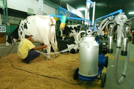 Baja-la-produccion-de-leche-por-las-lluvias