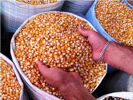 Mercado-de-maiz-continua-saturado-por-sobreoferta