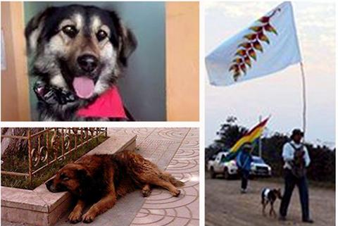 Tres-perros-que-acompanaron-las-diferentes-luchas-sociales