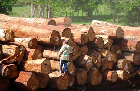 Ref. Fotografia: Comercio. Los forestales están inmersos en una crisis, debido al aumento de las importaciones.