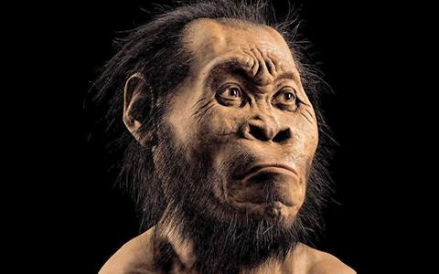 -Descubren-un-nuevo-antepasado-del-hombre:-el-Homo-naledi-