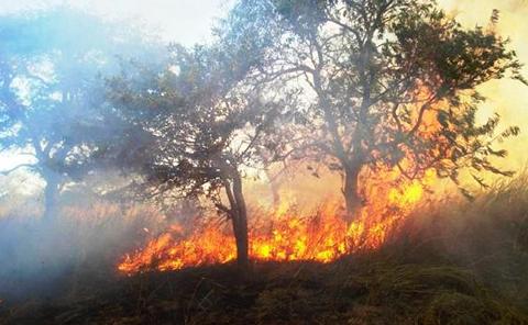 Las-quemas-aumentaron-en-2015-y-afectaron-mas-a-cuatro-municipios