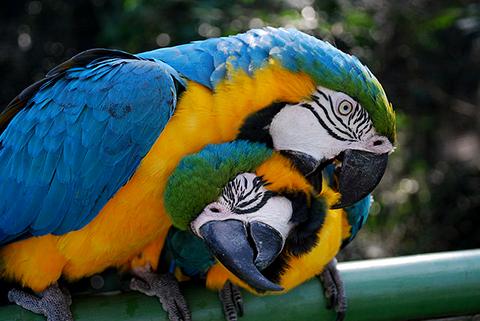 Bolivia-pide-la-repatriacion-de-60-parabas-azules-enviadas-ilegalmente-a-EEUU