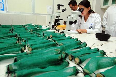 Buscan-un-insecticida-eficaz-para-combatir-el-dengue