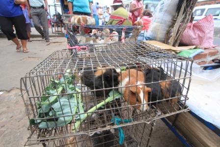 Rescatan-290-animales-silvestres-en-comercio