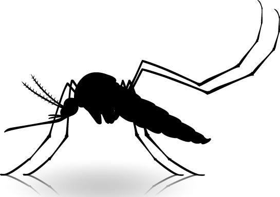 Aedes-Aegypti,-el-vector---transmisor-de-tres-males-