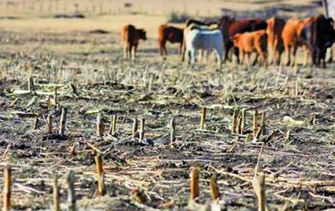 El-62%-de-la-produccion-agricola-se-perdio-por-sequia-y-heladas-en-Potosi