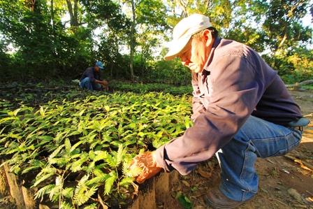 Ref. Fotografia: Espacio. Se busca la plantación de especies que sean sostenibles económicamente.
