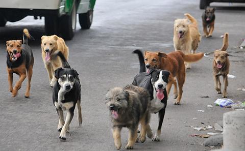 Hay-158-casos-de-rabia-canina-en-Santa-Cruz-
