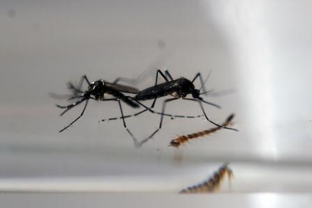 Hay-emergencia-sanitaria-mundial-por-virus-del-Zika