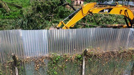La-alcaldia-prohibe-la-tala-de-arboles-en-predios-urbanos-de-Santa-Cruz