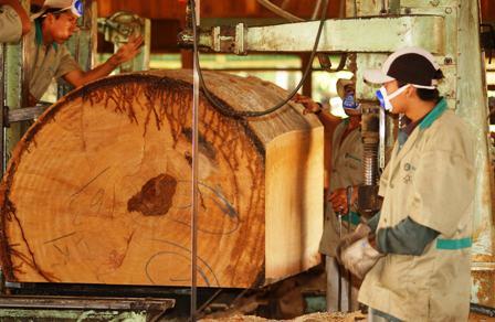 Ref. Fotografia: Sector. La cadena productiva forestal está disminuyendo al bajar la producción y comercialización de madera.