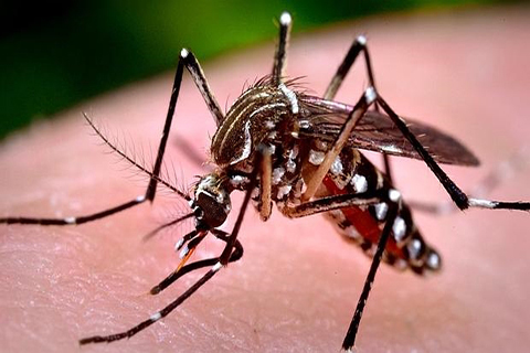 Brasil-confirma-907-casos-de-microcefalia-vinculados-al-Zika