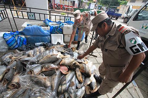 Decomisan-mas-de-dos-toneladas-de-pescado-en-mal-estado