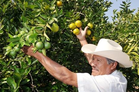 Molestia-por-retraso-en-planta-de-citricos