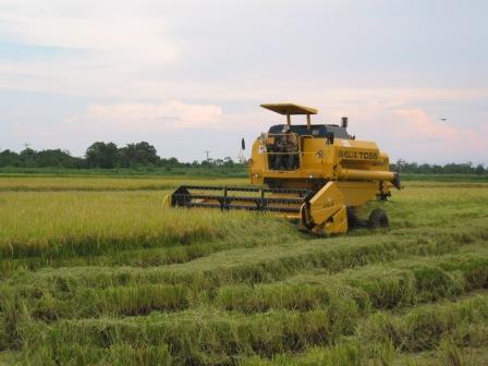 -Solo-se-llegara-a-100-mil-hectareas-de-arroz
