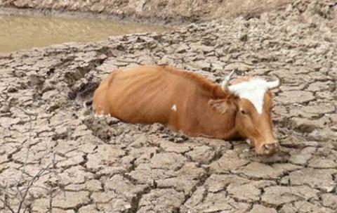 Bolivia-conmemora-el-Dia-de-la-Madre-Tierra-en-medio-de-graves-impactos-por-cambio-climatico