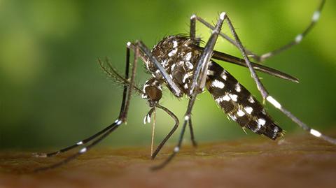 Reportan-un-caso-de-zika-en-La-Guardia-y-suman-26-en-Santa-Cruz