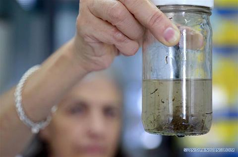 Ya-hay-casos-de-zika-en-cuatro-municipios-de-Santa-Cruz