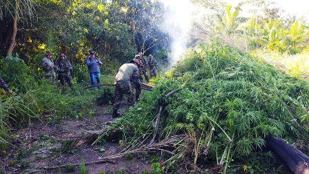 Queman-seis-hectareas-de-marihuana-en-San-Julian